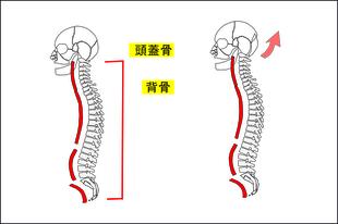 肩コリがひどいと首関節が歪む