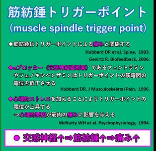 筋肉の痛みの一因である、筋紡錘トリガーポイントは、交感神経と関係があります。