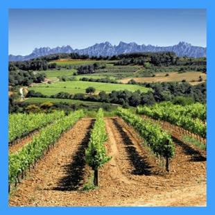 Tour de vinos y cavas en el Penedés