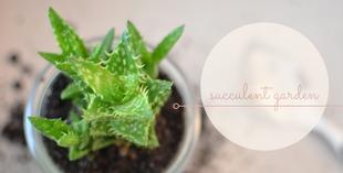 Gurkengläser als Vasen