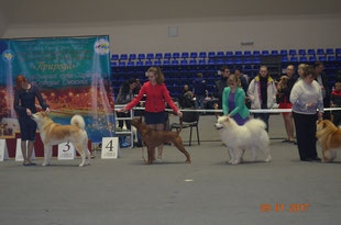 thai_ridgeback,winner,champion,dog,kennel,http://manidaeng.jimdo.com #thai_ridgeback #тайскийриджбек#тайский_риджбек #питомник #питомниксобак #kennel