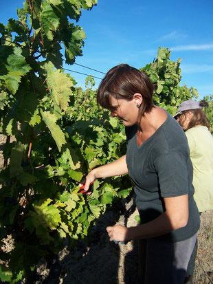 gite vignoble gites de france dans l'AUDE