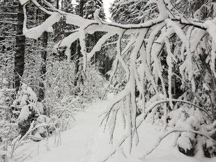 Wochenlieblinge, Kraftquelle, Auszeit im Paradies,  Auszeit in der Natur, Wintermagie, verschneiter Wald, verschneiter Winterwald