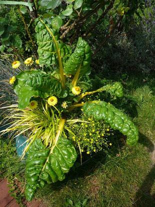 Mangold, Strohblumen und Gras