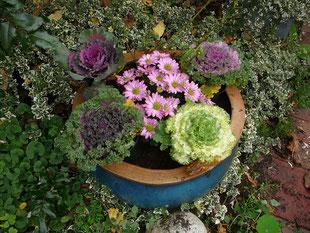 Zierkohl und Chrysantheme