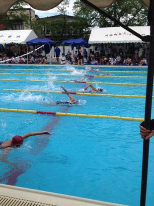 6年女子50m自由形7組のレース