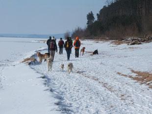Training mit Hunden beim Ausflug im Schnee