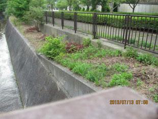 Y.Iさんが草刈りをしてくれた名塩幹線脇の河川敷