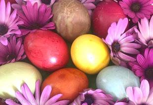 Ostereier mit Pflanzen gefärbt