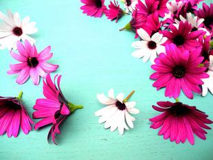 Frühlingsblumen Mai
