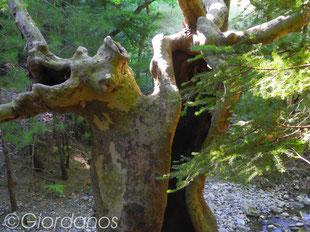 Wasserfall Drimonas Evia Griechenland-Flora