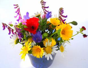 Frühlingsblumen Wiesenblumen
