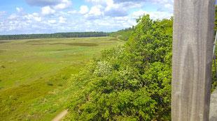 Blick auf die moorige Grathe Heide