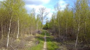 die Stursbøl-Plantage mit noch jungem Baumbestand