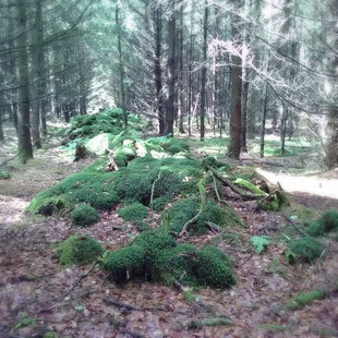 Hügelgräber in der  Havredal Plantage