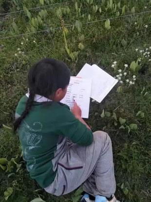 Révision du cours dans l'herbe