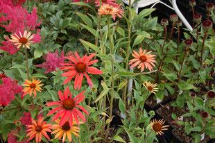 Fotos: Kreisverband für Gartenbau und Landespflege