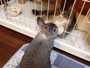 ウサギちゃんとひまわりくん