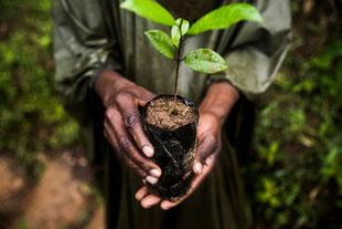 Empoderar a los pueblos indígenas será clave para la conservación de ecosistemas / Foto: Joan de la Malla. SINC