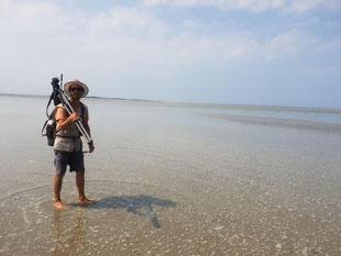 Guide nature, Travers&e de la Baie de Somme, phoque