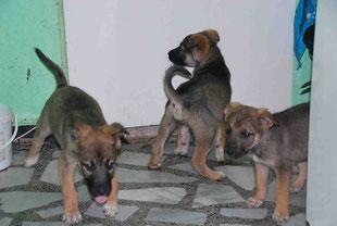 Dina, Daisy und der kleine Dixon (rechts)