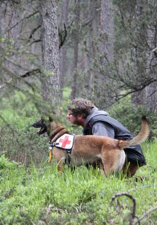 Sanitätshund Training Hundeschule