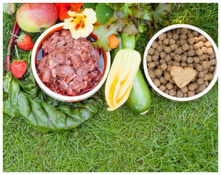 Ernährung des Hundes, Ernährungsberatung