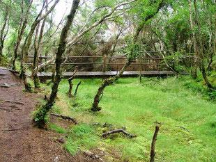 Culag Woods Highlands of Scotland