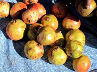herrliche Granat-Äpfel...