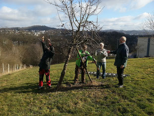Die Bäume werden den Pflegeschnitt honorieren (mp)