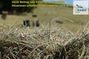 Erhalt artenreicher Heuwiesen, ein wichtiger Beitrag  zum Erhalt der Artenvielfalt (hu)