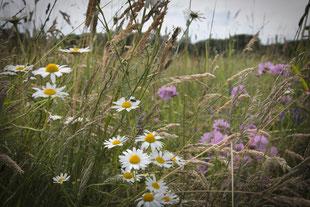 artenreiche Magerwiesen sind ökologisch wichtig für Pflanzenvielfalt und Tiere (hu)