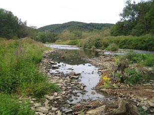 Die Agger in Ohl Grünscheid . Mittlerweile ist dort eine reichliche Vegetation entstanden, mit Bäumchen, die sich zu  einer Flussaue entwickeln können. Es droht die Wiederauffüllung des Staus, wenn die marode Wehrklappe im nächsten Jahr ersetzt wird.