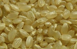 輸入時は、この玄米の状態で保存されています