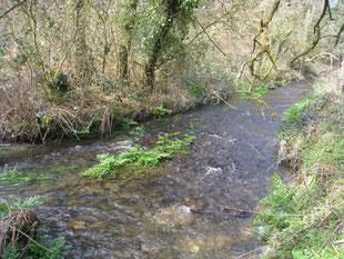 Le ruisseau de Meil Gledig à hauteur de Pont Trapier, en Landeleau
