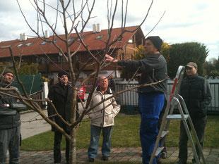 Obstbaumschnittkurs bei Fam. Lankes