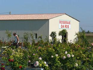 Roseraie Da Ros dans le Lot et Garonne vente de rosier par correspondance vente en ligne