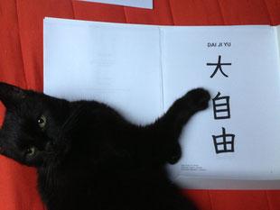Kira, mein verkanntes Reiki-Genie, kontrolliert meine Seminarunterlagen. ;-)