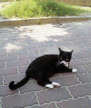 自由を満喫しているが、家猫にはない緊張感が漂う。