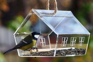 Прозрачная кормушка для птиц. Купить прозрачную кормушку.
