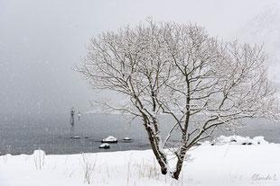 Norvège,ile de senja,hiver,