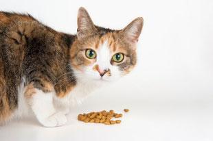 Alimentazione del gatto domestico
