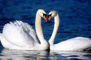 Фото с сайта: http://www.zooclub.ru/birds/vidy/118097.shtml