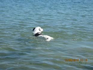 """Spike beim Schwimmen"""""""