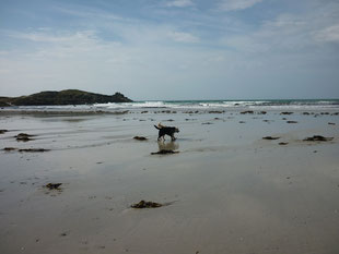 + Nico und Percy am Strand