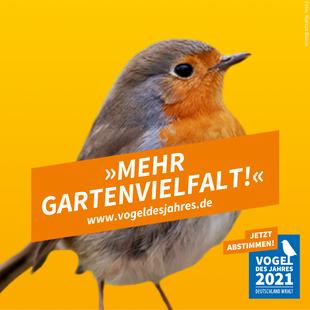 Wahlplakat Rotkehlchen