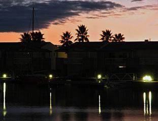 20. Januar 2014 - Wo Palmen um Licht kämpfen