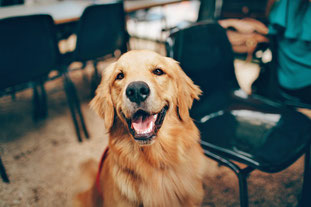 Hundetraining MasterClass