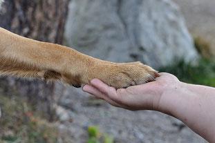 Hundeerziehung und Training