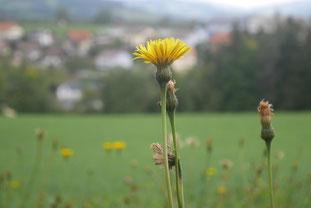 Aussicht nach Wenigzell